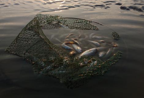 Olga Mironenko's presentation on anthropogenic pollution and unsustainable fishing practices